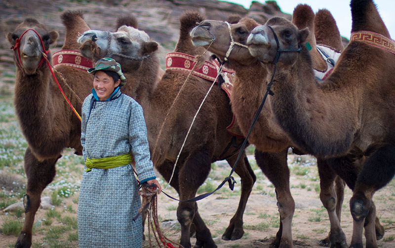east-gobi-nomad-with-camels