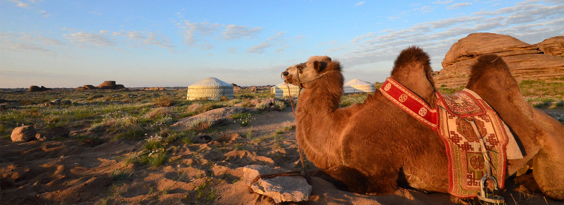 elst-camping-with-camel