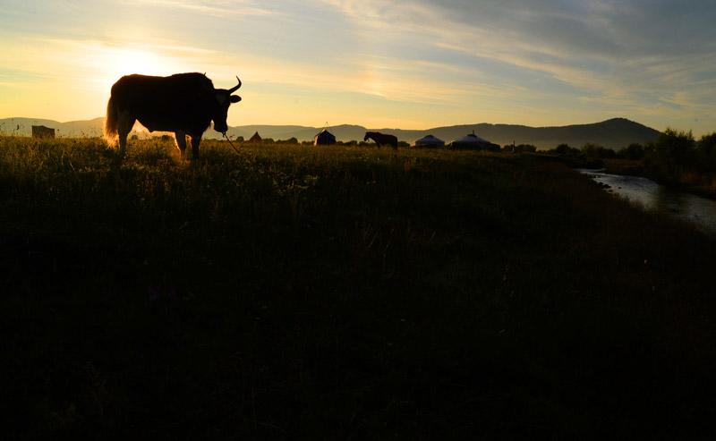 yak trek sunrise