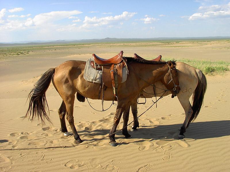 arburd-sands-horse