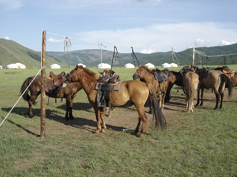 jalman-meadows-horses
