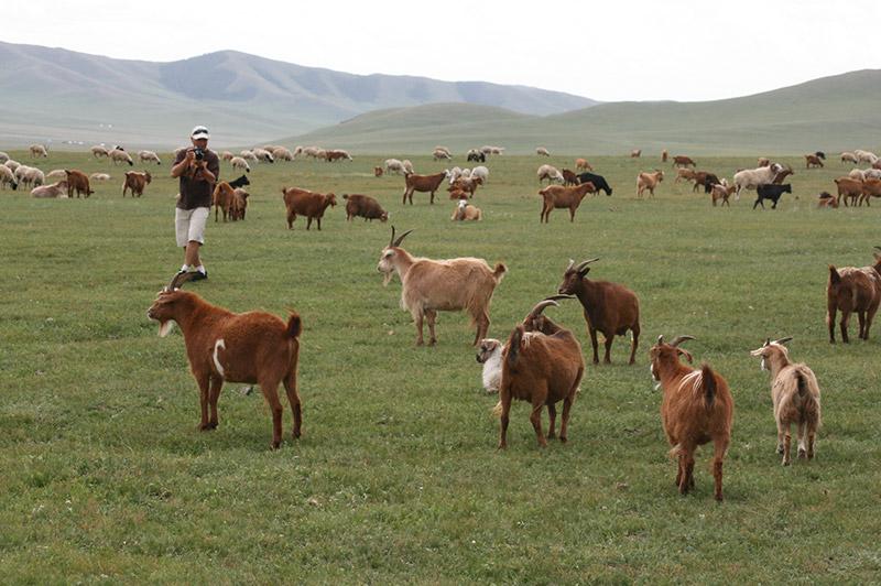 jalman-meadows-livestocks