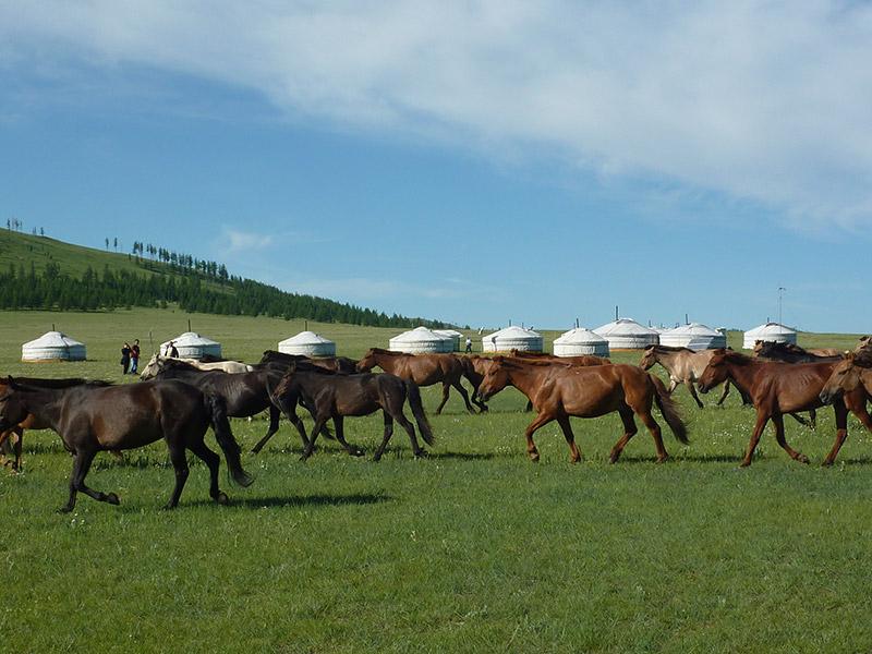 jalman-meadows-roaming-horses
