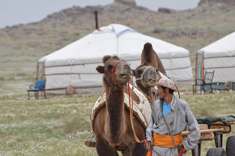 local-nomad-with-camel-carts