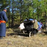 local-nomad-with-yak