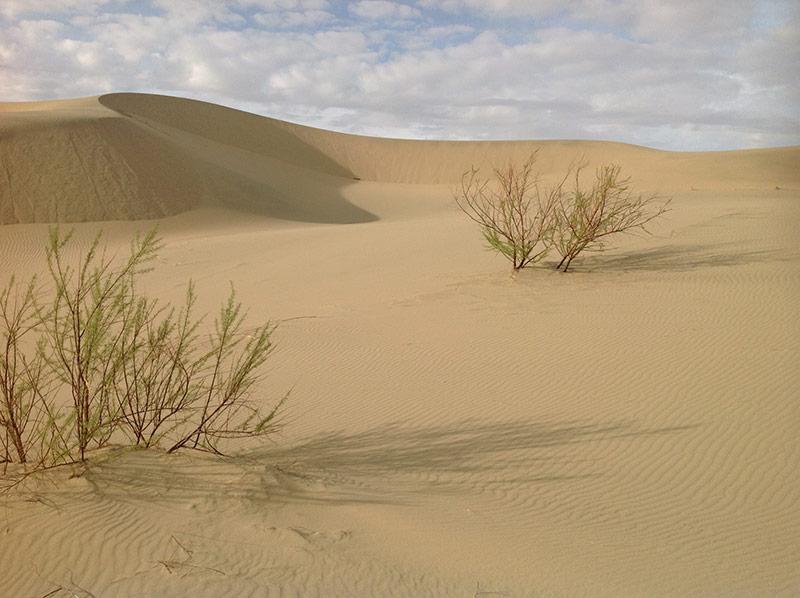 south-gobi-desert