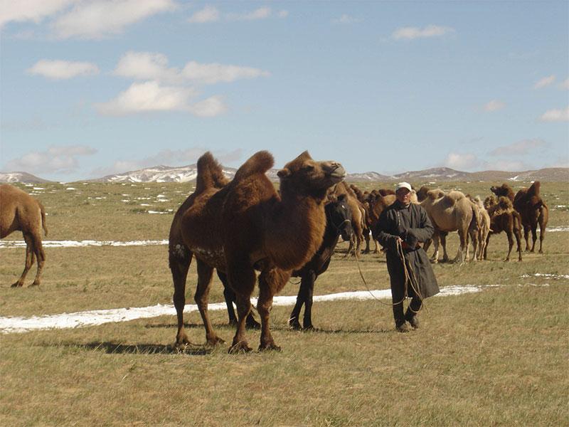 arburd-nomads