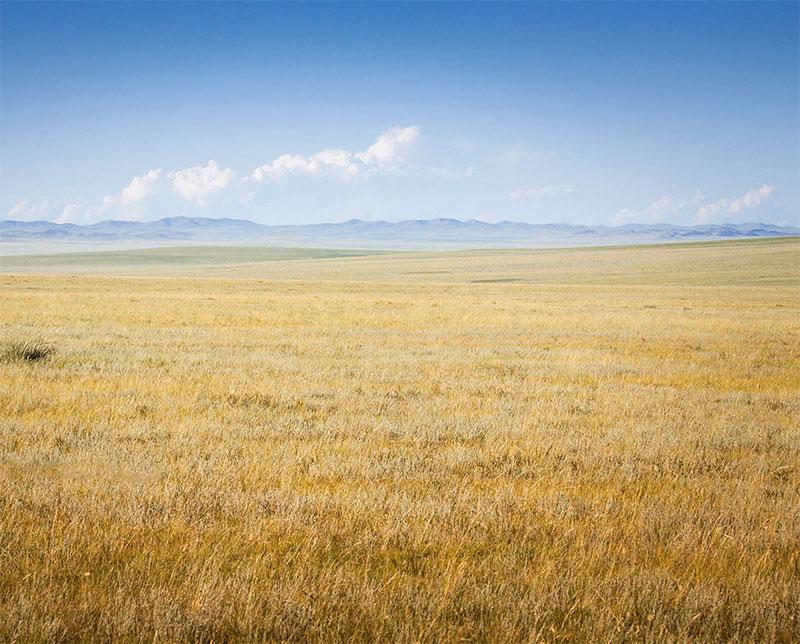 arburd-steppe