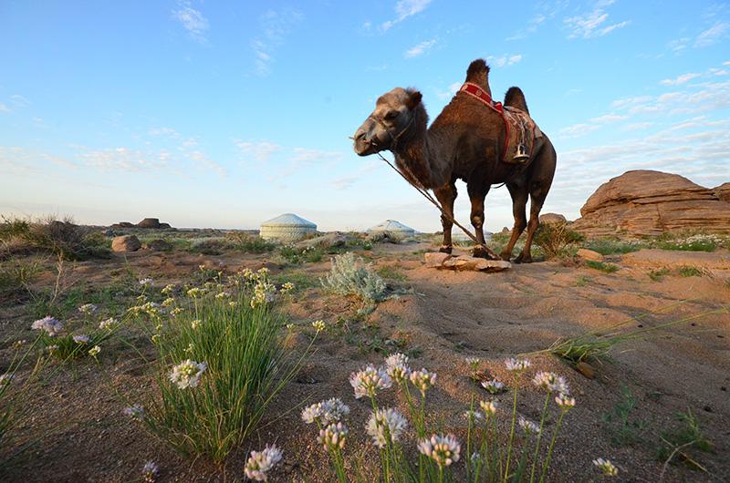 camel-in-elst
