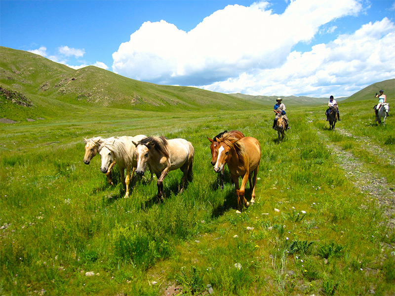 horses-in-mongolia