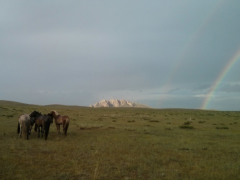 horses-in-the-gobi-steppe
