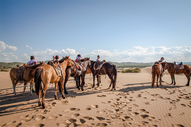 horses-in-the-steppe-sands
