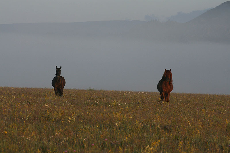 jalman-horses