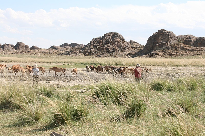 mongolia-animals
