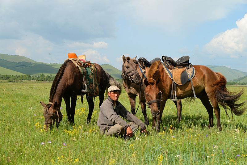 mongolian-horses