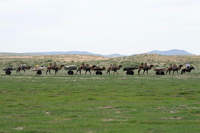 camel-caravan