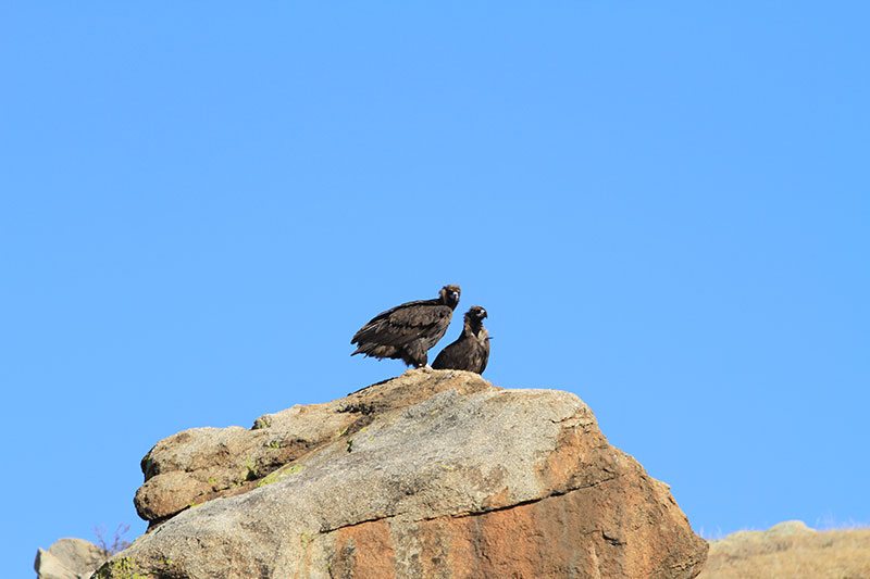 bird-in-hustai